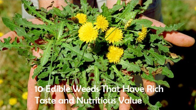 edible weeds for food