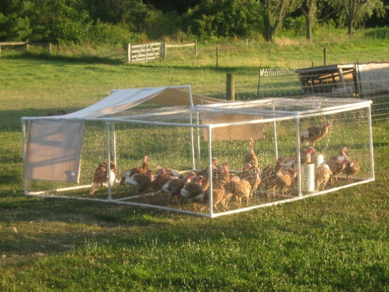 pvc Chicken Pen