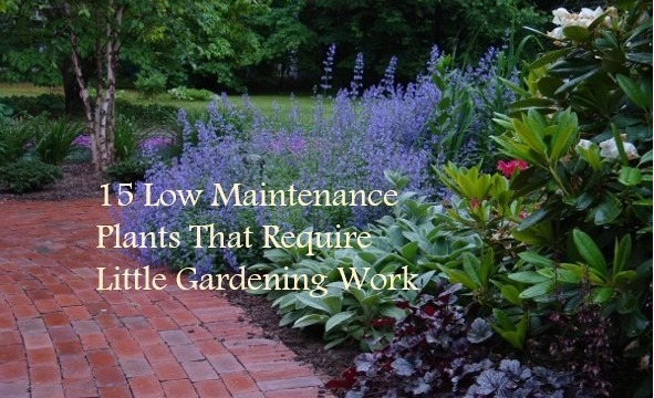 15 low maintenance plants that require little gardening for Small no maintenance garden
