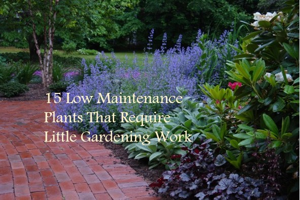 Do It Yourself Home Design: 15 Low Maintenance Plants That Require Little Gardening