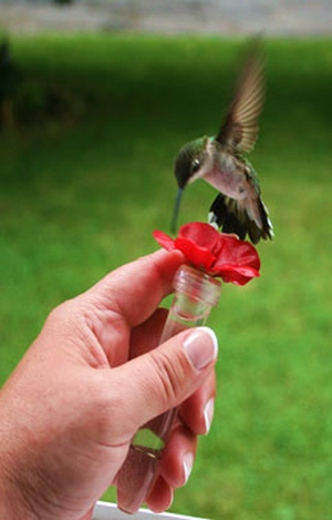 Hand Held Hummingbird Feeder