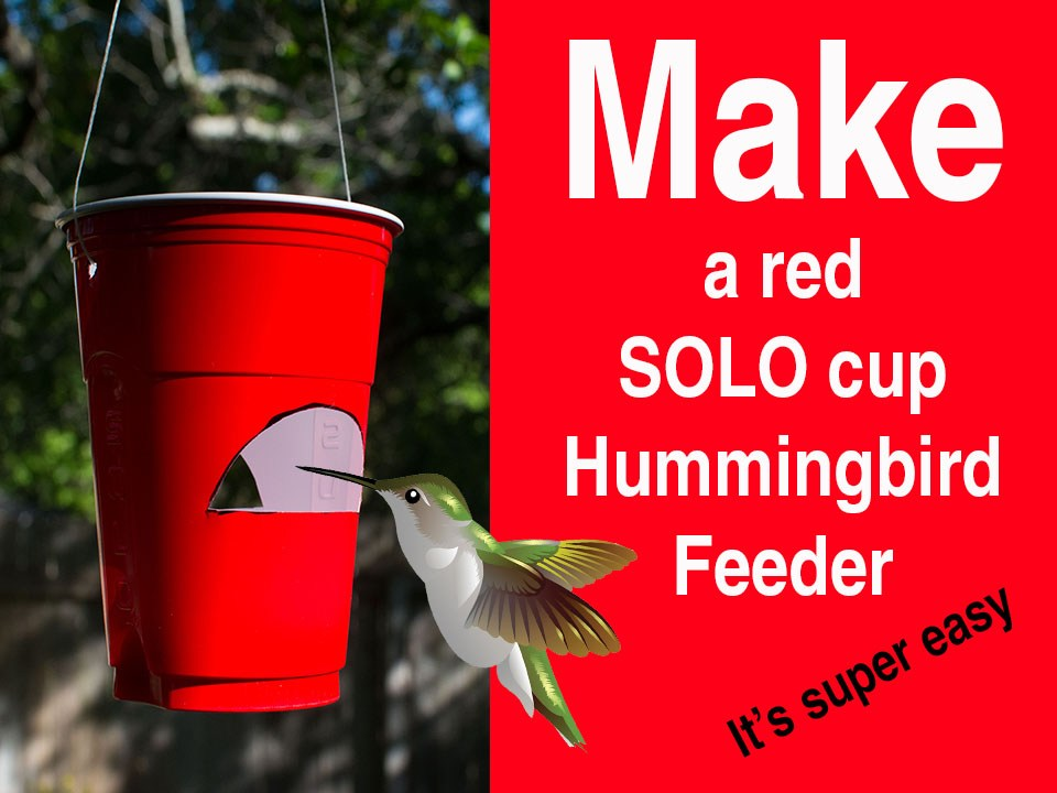 Red Solo Cup DIY Hummingbird Feeder