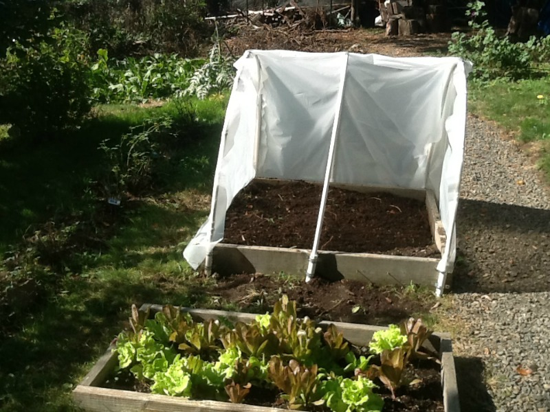 Get Instructions To Make DIY Hoop House Over Garden Bed