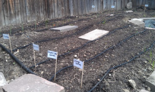 Timed Drip Irrigation System