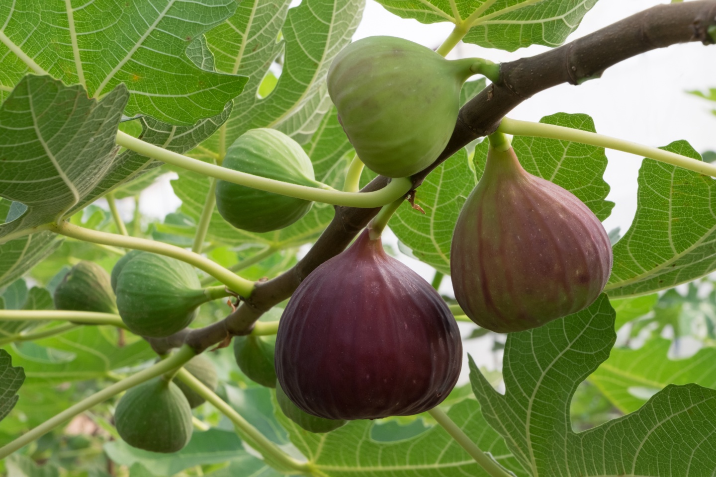 indoor fruit trees fruits for healthy living