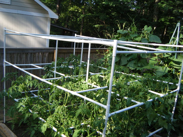 homemade trellis from PVC pipes