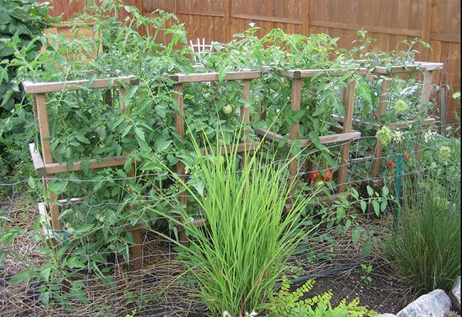 diy tomato cages