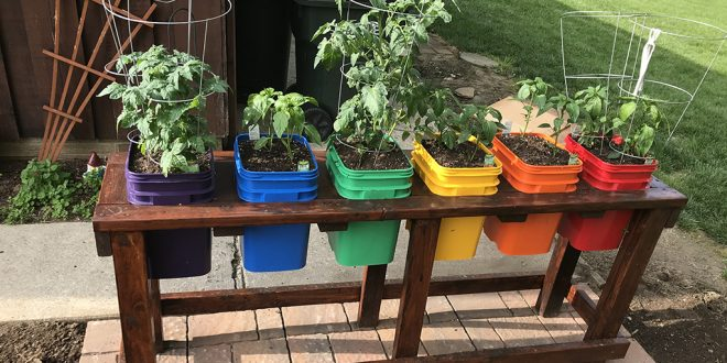 Vegetables That Grow Well In A Pots