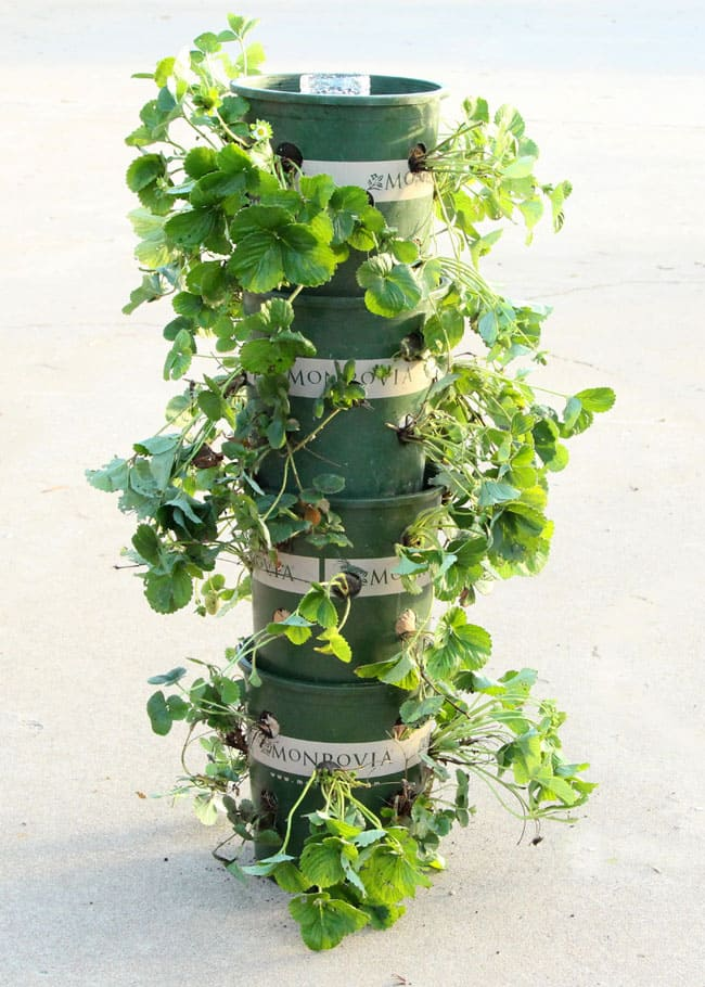Strawberry Tower garden