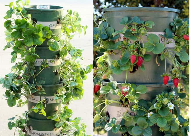 diy tower garden - Tower Garden