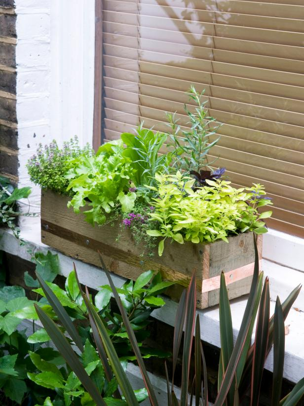 Grow Herbs And Vegies In Window Box