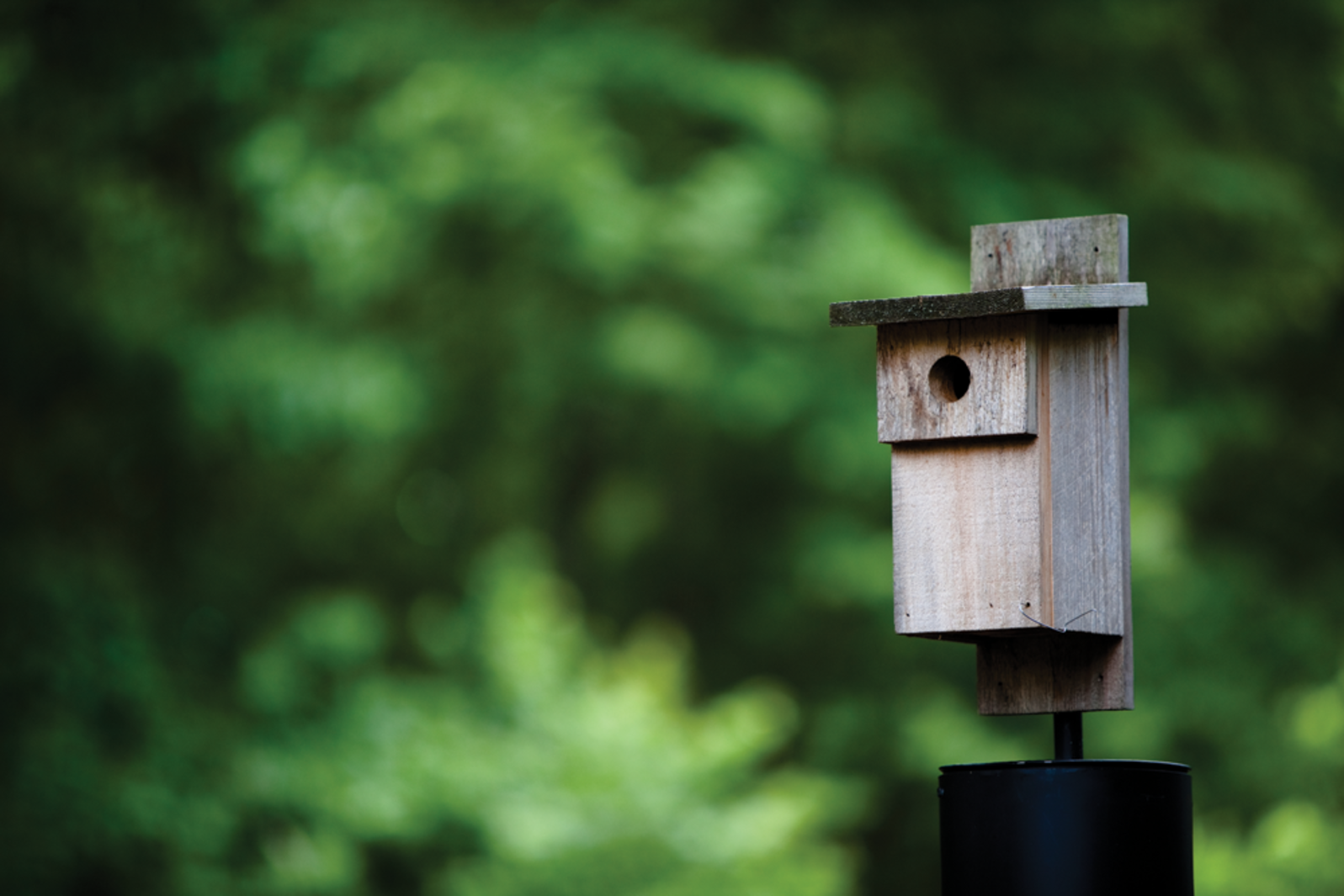 Build a Bluebird Box