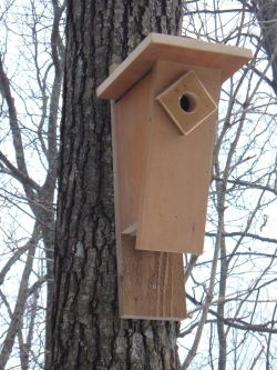 11 Cool Bluebird House Plans To Attract Them To Yard The