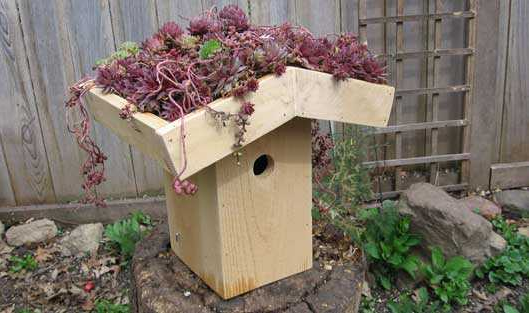 Create a Green Roof Birdhouse