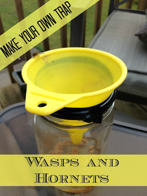 DIY Hornet and Wasp Trap