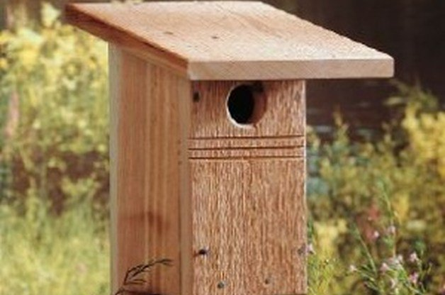 Eliminate Garden Pests By Building A Bluebird House