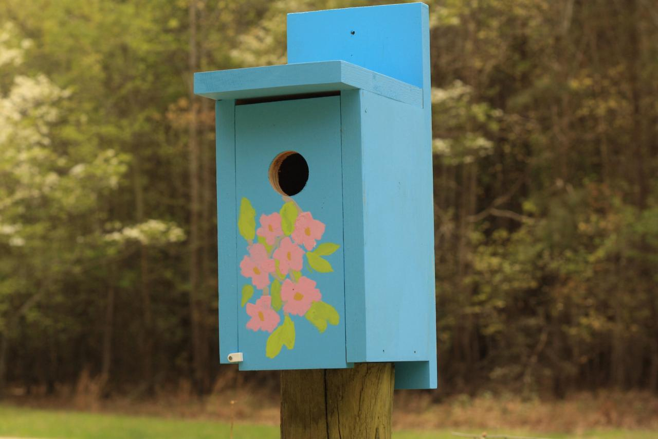 Give Your Bluebird House Superior Look By Painting It