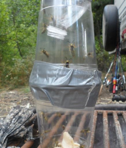 Plastic Cups Homemade Wasp Trap