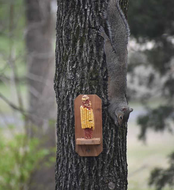 Basic DIY Squirrel Feeder