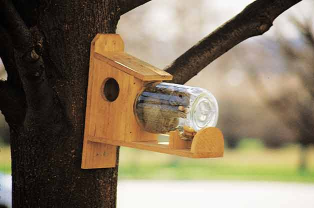 DIY Under Glass Squirrel Feeder