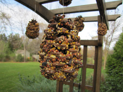 Pine Cone DIY Squirrel Feeder