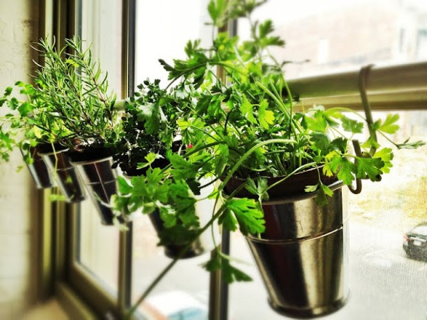 DIY Window Hang Garden