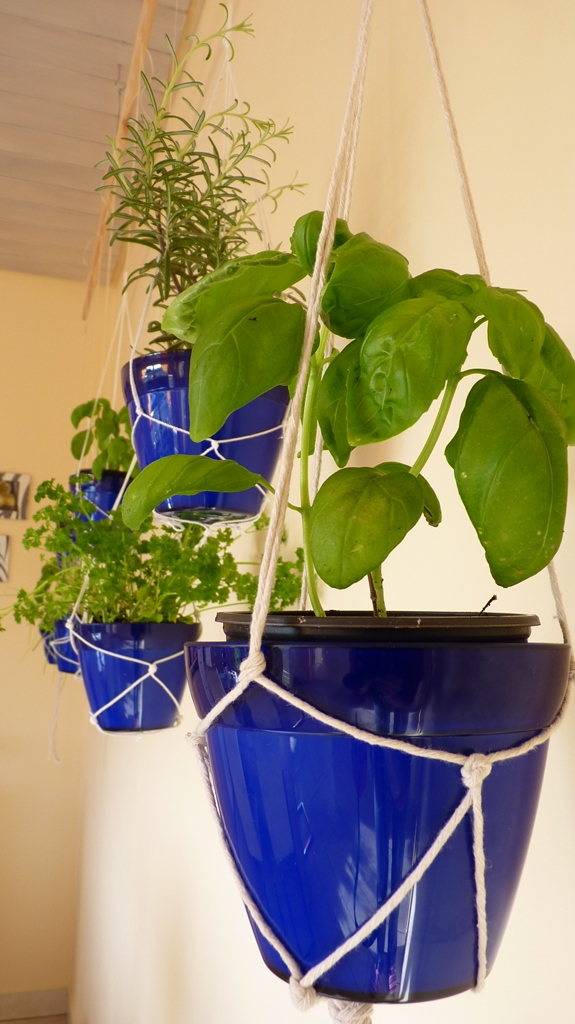 String-Held Indoor Hanging Herb Garden