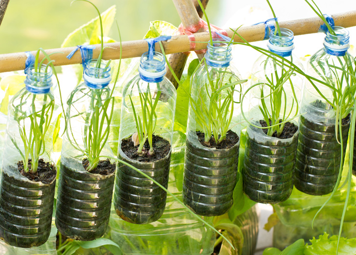 Water bottle herb garden