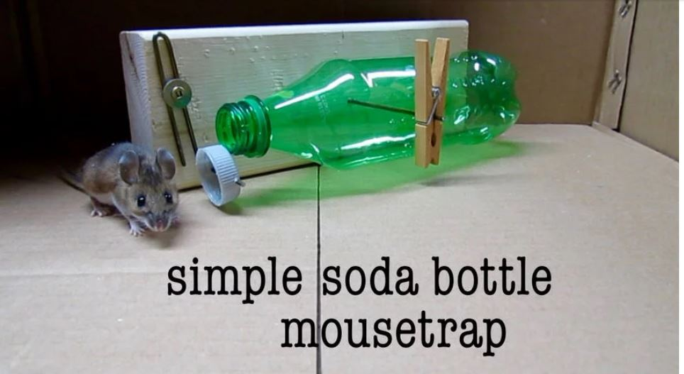 Simple Soda Bottle DIY Mouse trap