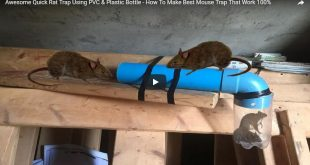 homemade mouse traps