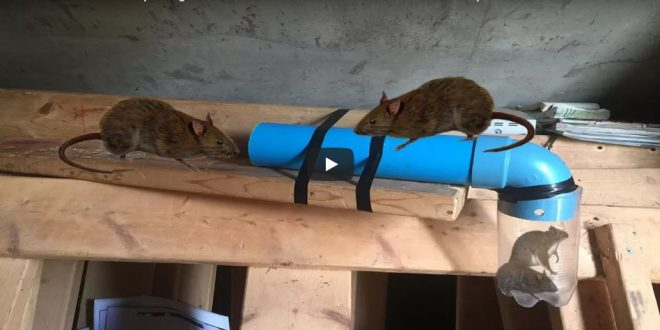 12 Homemade Mouse Traps That Work Great