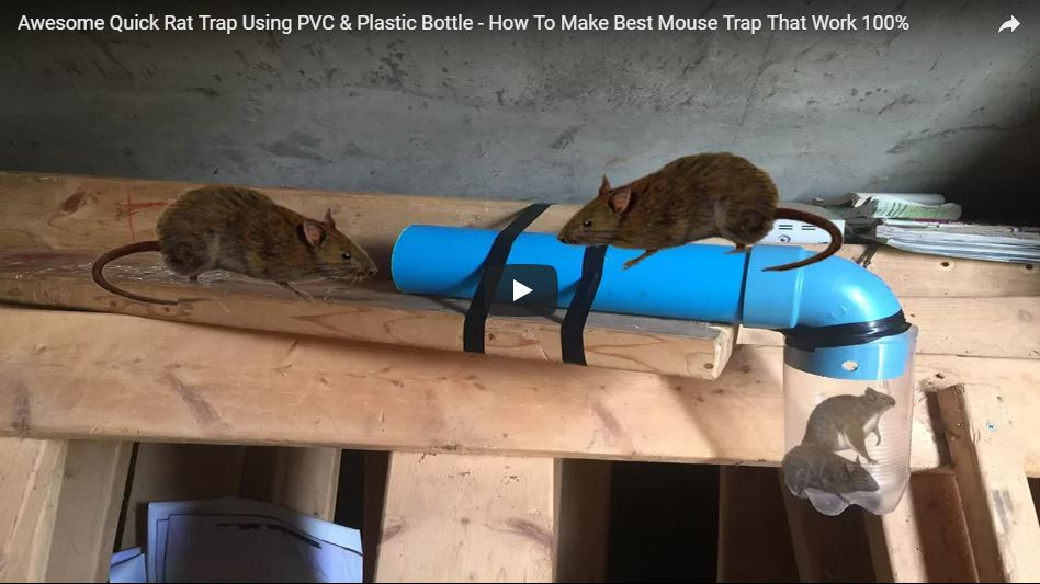 DIY Rat Trap Using PVC & Plastic Bottle