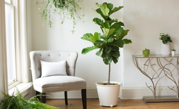 15 Best Low Light Indoor Trees You Can Grow Easily The