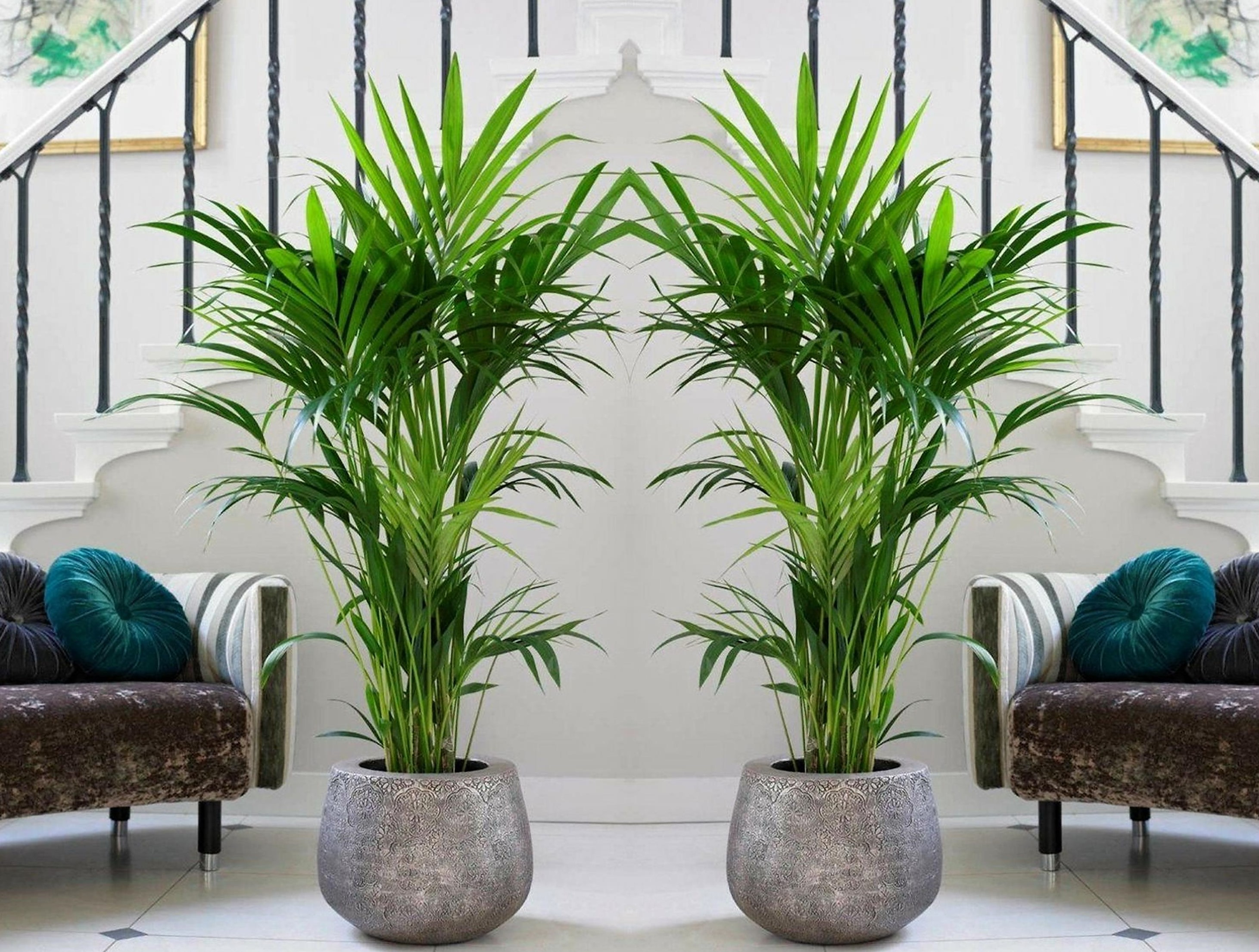 15 Best Low Light Indoor Trees You Can Grow Easily - The ...