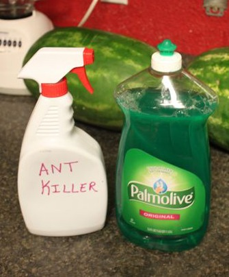 Dish Soap Ant Killer