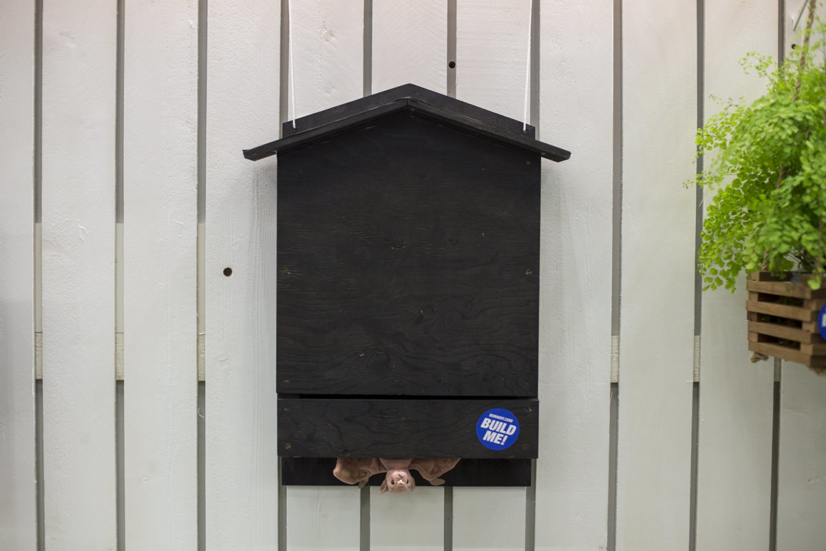 DIY Bat Box