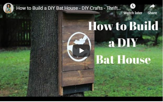 DIY Bat House