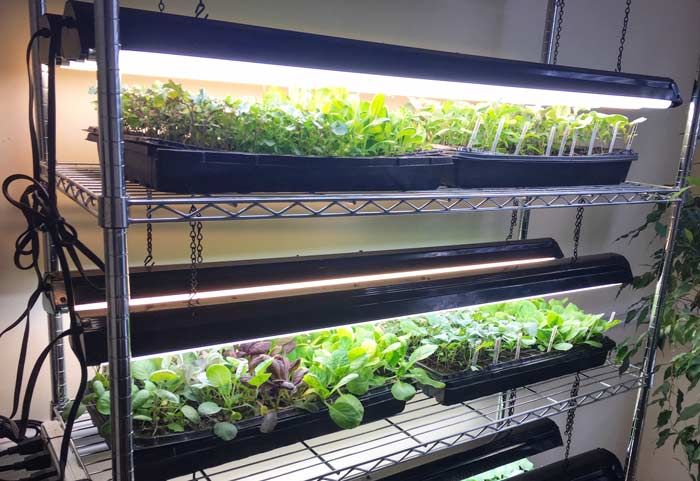 27 Diy Led Grow Lights For Growing Plants Indoors Home