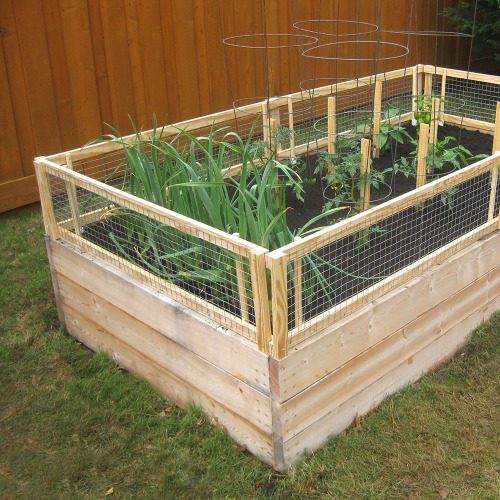 Pest-Protected Raised Garden Bed