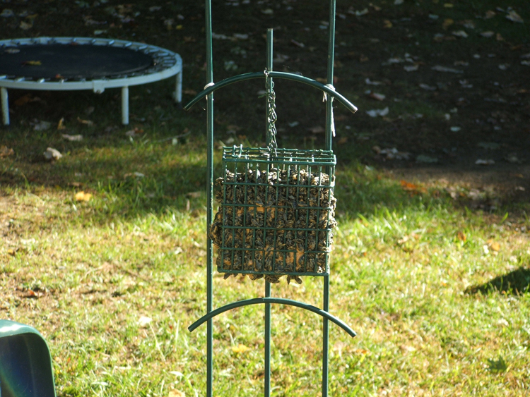 Recycle Suet Cage Squirrel Feeder Plans