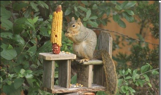 Table and Chair DIY Squirrel Feeder
