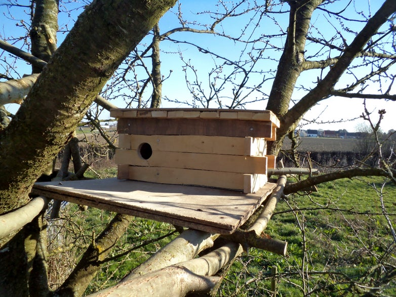 Little Owl House