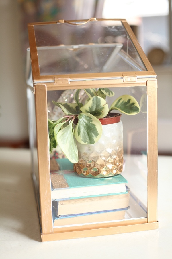 DIY Gold Mini Greenhouse
