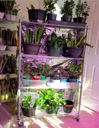 DIY Portable Indoor Greenhouse