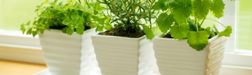 10 Famous And Easy Herbs To Grow Indoor During Winter-Make  Your Indoor Herb Garden