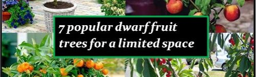7 Popular Dwarf or Miniature Fruit Trees For A Limited Space