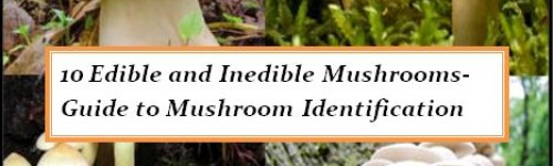 10 Edible and Poisonous Mushrooms-Guide to Mushroom Identification
