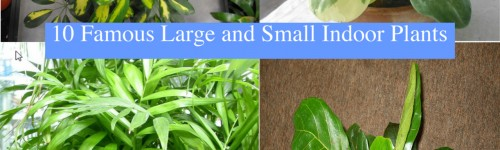 10 Famous Large and Small Indoor Plants