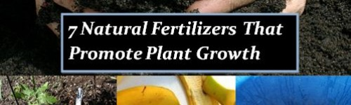 7 Natural Fertilizers That Promote Plant Growth