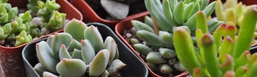 Indoor Succulents-10 Easy Tips On How To Grow Succulents